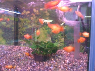 All About Aquarium Fish: Tropical Fish Care Guides