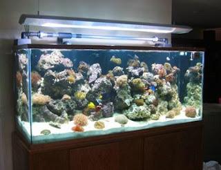All about aquarium fish marine coral tank setup for Koi fish tank setup