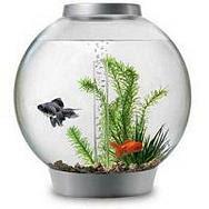 Beginner Fish Tank