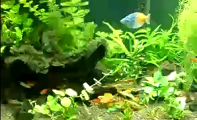 aquarium model