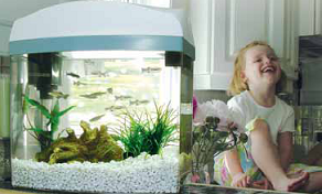All about aquarium fish best pet fish for kids for Best fish for kids