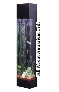 All about aquarium fish 3 main disadvantages with tower for Tower fish tank