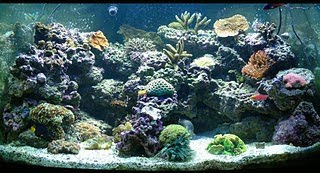 display aquarium show tank