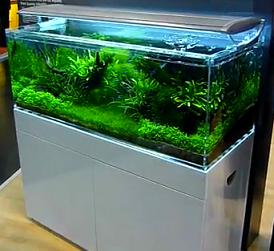 fish tank reviews