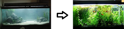 comparing aquarium before and after fish filter