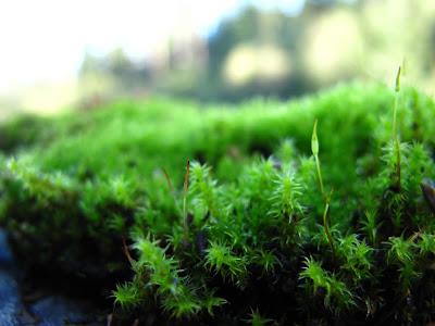 moss northwest Washington forest