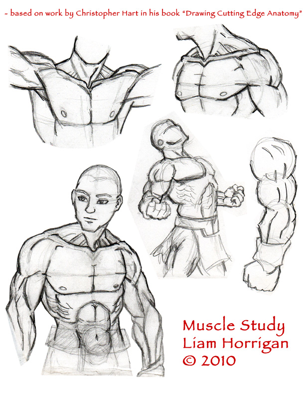Mythological Studios: MUSCLE STUDY a la Christopher Hart