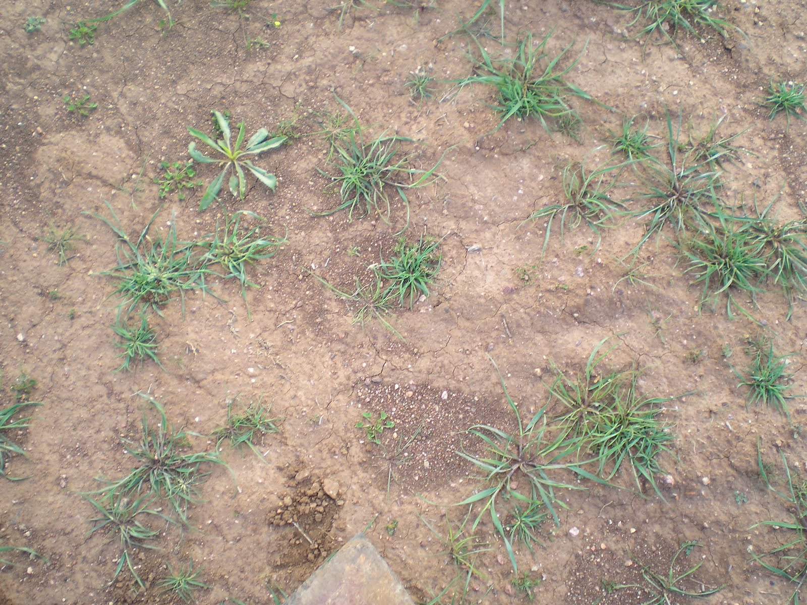 effect of clay in soil on Effect of temperature on strength of soils clay soils tested without ture of the material also have important effects on the soil properties.