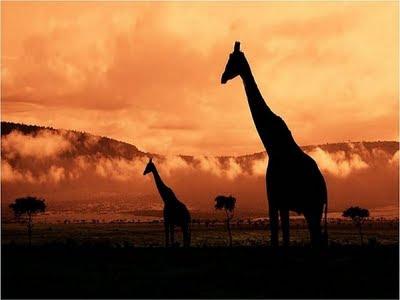 http://3.bp.blogspot.com/_0OIuN5ZOWUw/SuTqZBR4hlI/AAAAAAAAFbw/ecbRrpB8-QQ/s400/Africa2.jpg