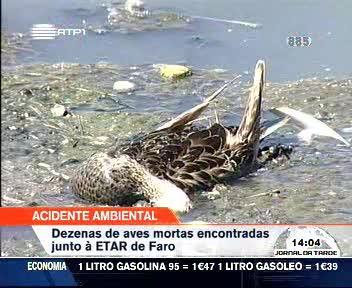 http://3.bp.blogspot.com/_0ONE-ZMEHJc/SfW95NmjV_I/AAAAAAAAB00/EX69OmzkSN4/s400/offavesmortas-Algarve-ETAR-Faro-Olh%C3%A3o-Ave-Morta-%C3%81guas-Botulismo-Doen%C3%A7a-Animal-Incinera%C3%A7%C3%A3o-Beja-PNRF-DRAPALG-CCDRAlg-Bird-Water-disease-NAMB.jpg