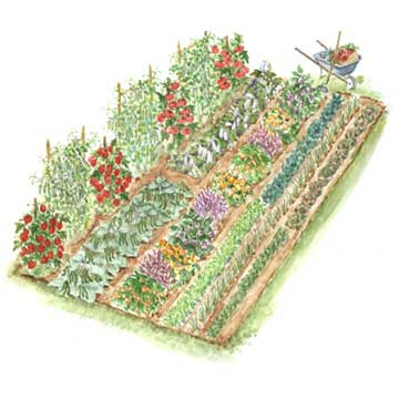 Design Home  Garden on From The Garden To The Table  Garden Layout And Plant List