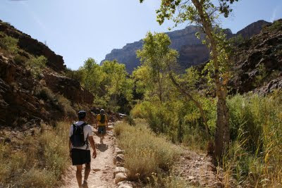 Riparian View on Bright Angel Trail