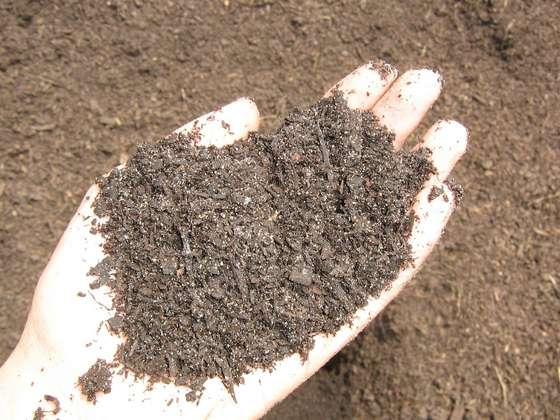 Seeduction organic fertilizers vs synthetic for Mineral soil vs organic soil