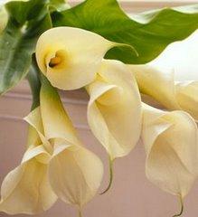Mi flor Favorita