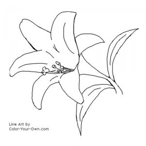 Printable Easter Coloring Pages on Free Printable Lily Coloring Pages