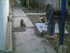 Puffa-rinna, Puffosu si Mishu-Pishu