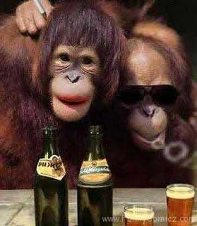 Gambar Gokil Abis monkey funny
