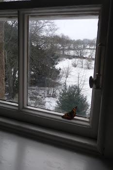las mariposa mágicas