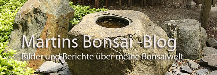 Martins Bonsai -Blog