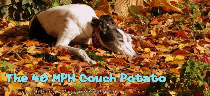 The 40 MPH Couch Potato