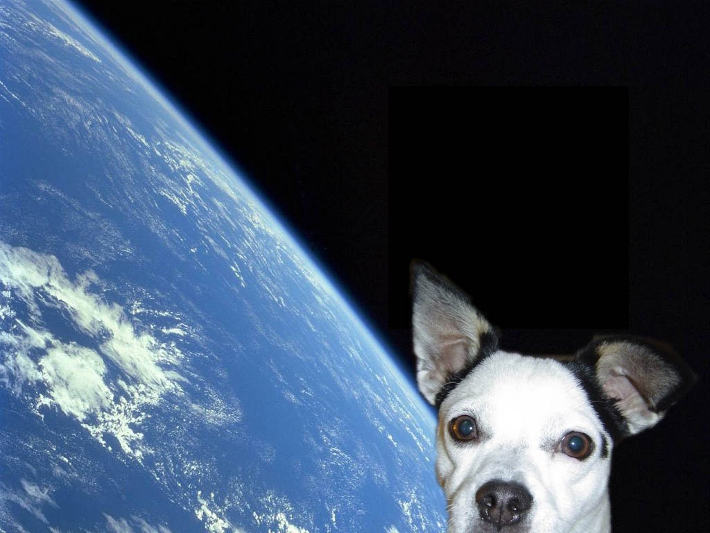 dog in space apollo - photo #7