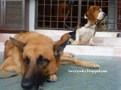 My Lil Doggies ♥
