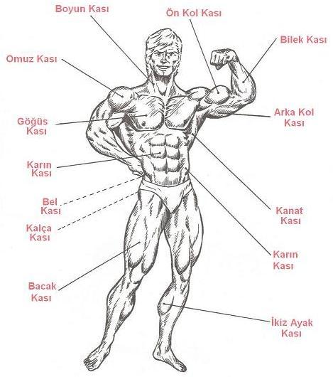 Скачать бесплатно книгу (журнал): Качаем мускулы. Упражнения для мускулату