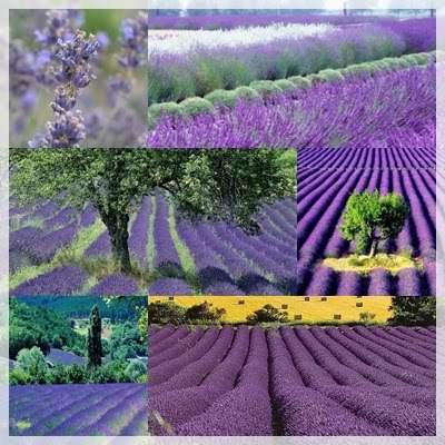 Maruska: inspirasjon hage