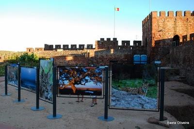 Exposição sobre o lince ibérico no Castelo de Silves, Verão 2010