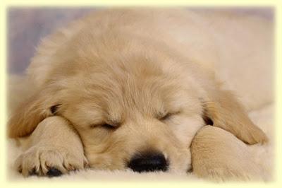 Por que os cães não vivem tanto quanto as pessoas?