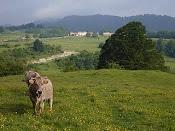 El toro de Pla Traver