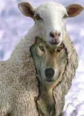 Y Not Goat contos, amenidades e r...