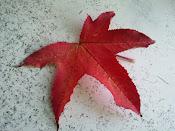 Colores de otoño!