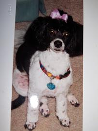 Gracie - 05/26/2000 to 12/01/2014