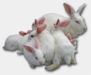 El mundo de los conejos - Monografias.com