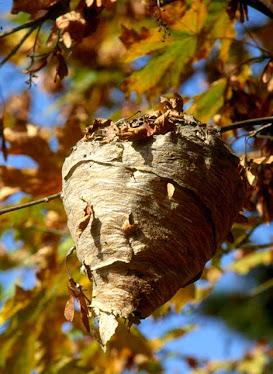 Paper Hornet's Nest