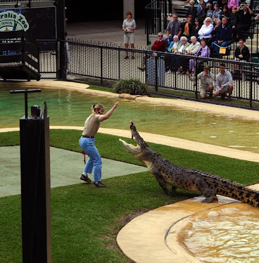 Australia Zoo show, Terri Irwin and Salt Water Crocodile