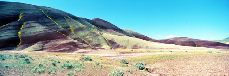Painted Hills flowers