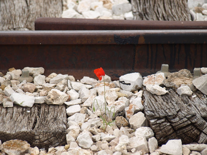 Amapola ferroviaria