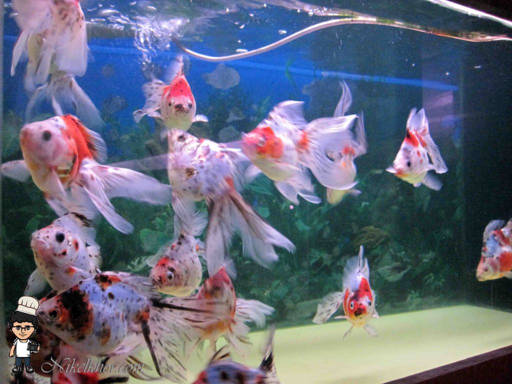 Fish aquarium in johor bahru - Address Nanyang Fish Farm