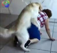humor perro chingón