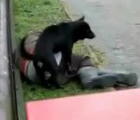 le viola un perro