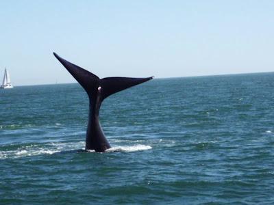 ballena aborda barco