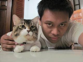 kucing imut, kucing lucu