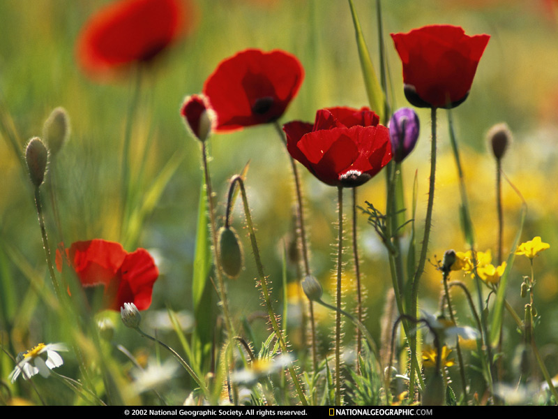 [petra-wildflowers-525137-sw.jpg]