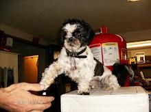 Sammy welcomes a customer