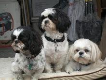 Sammy,Sadie,Molly