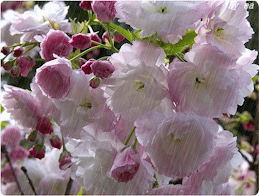 Rainy Flowers