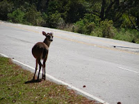 Poor thing... one of the last shots of this beautiful deer.