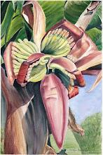 bapak demang, bunga pisang